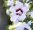 Estancia El Ombu, San Antonio de Areco, Argentina - flower