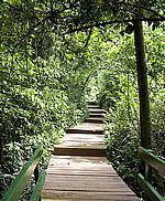 Hotel das Cataratas, Iguassu Falls, Brazil - trail path