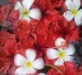 Flowers in water at Villa Citakara Sari, East Bali