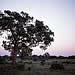 Singita Ebony, Kruger Park