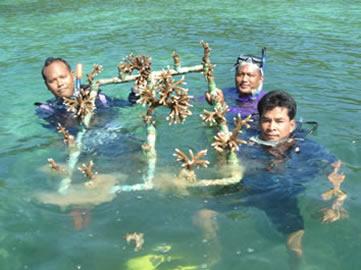 Koh Talu Island Resort, Ban Saphan, Thailand - coral project team
