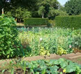 Cotswolds Manor, Shipston on Stour, England - vegetable garden