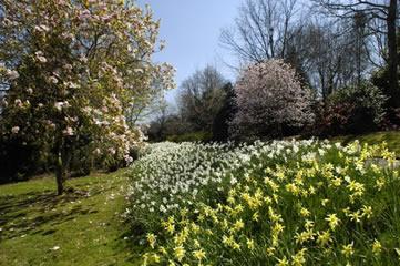 Waters Reach, Lerryn, Cornwall - spring flowers