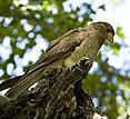 Estancia El Ombu, San Antonio de Areco, Argentina - bird