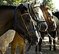 Estancia El Ombu, San Antonio de Areco, Argentina - horses
