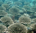 Koh Talu Island Resort, Ban Saphan, Thailand decorative - coral